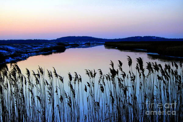 Wall Art - Photograph - Marshy Twilight by Hanni Stoklosa