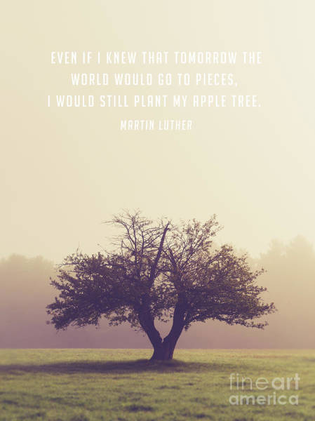 Inspirational Quote Photograph - Martin Luther Apple Tree Quote by Edward Fielding