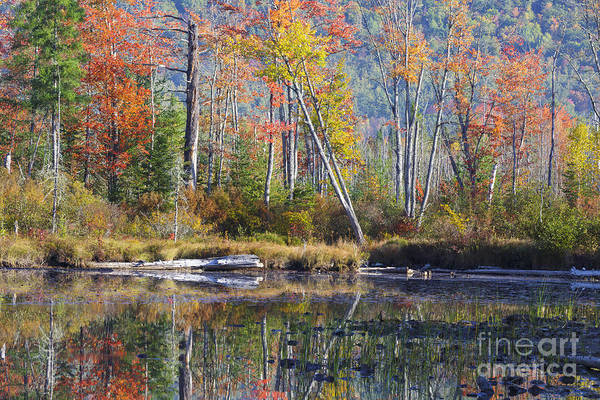 Photograph - Martin Meadow Pond - Lancaster New Hampshire by Erin Paul Donovan