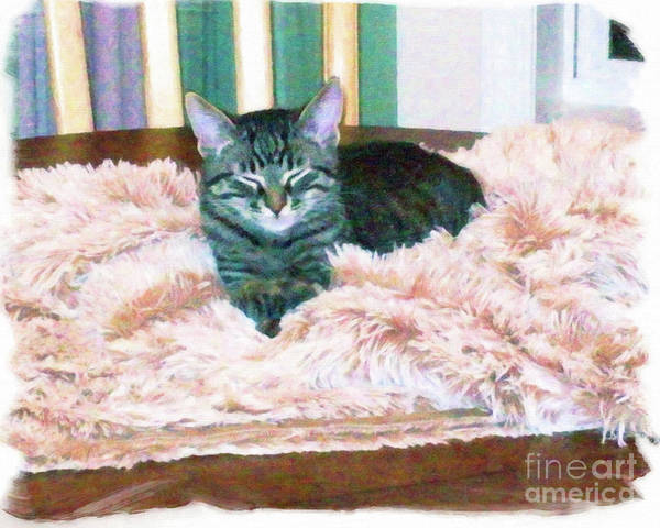 Digital Art - Martius The Black And Tan Tabby by Donna L Munro
