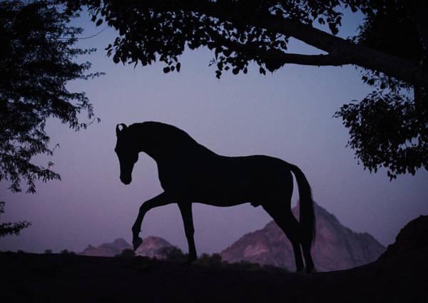Photograph - Marwari Horse In Twilight by Ekaterina Druz