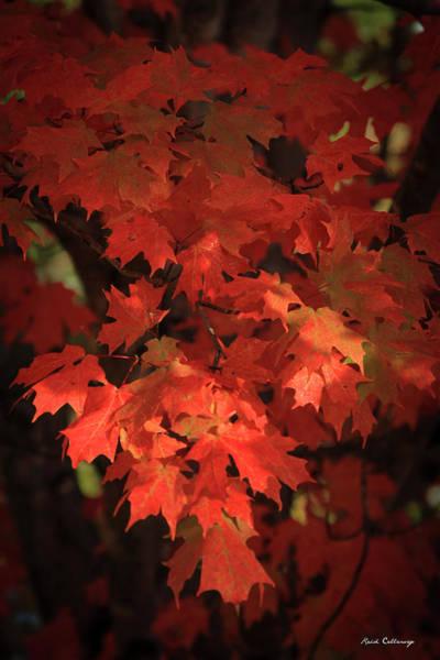 Photograph - Mary Maple Fall Leaf Art by Reid Callaway