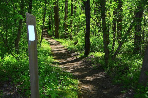 Photograph - Maryland Appalachian Trail by Raymond Salani III