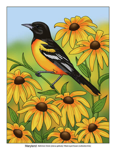 Baltimore Oriole Wall Art - Painting - Maryland State Bird Oriole And Daisy Flower by Crista Forest