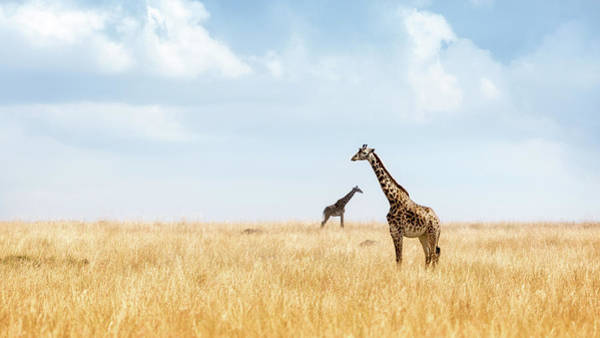 Flag Wall Art - Photograph - Masai Giraffe In Kenya Plains by Susan Schmitz