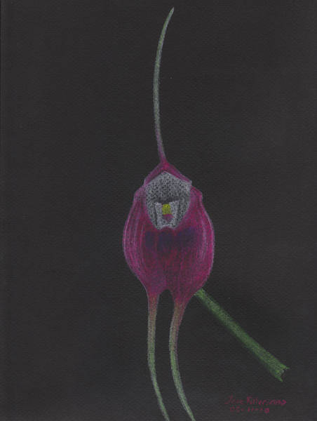 Pastel - Masdevallia Infracta Orchid by M Valeriano