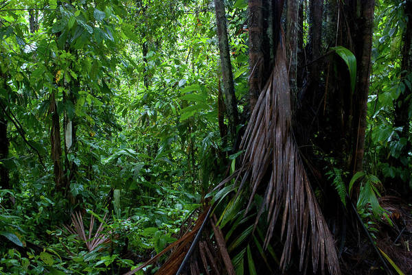 Photograph - Mashpi Forest by Cascade Colors
