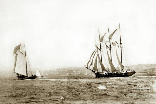 Photograph - Master Mariners Regatta,  Racing Sail Boats   William L. Oliver,  1884 by California Views Archives Mr Pat Hathaway Archives