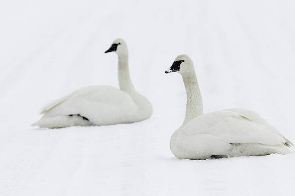 Photograph - Matching Pair by Ronnie and Frances Howard