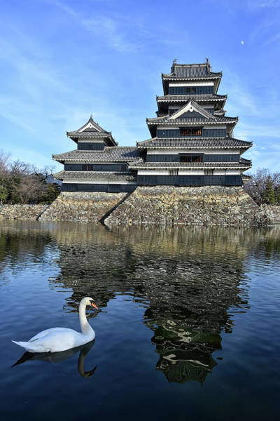 Photograph - Matsumoto Swan by Kuni Photography