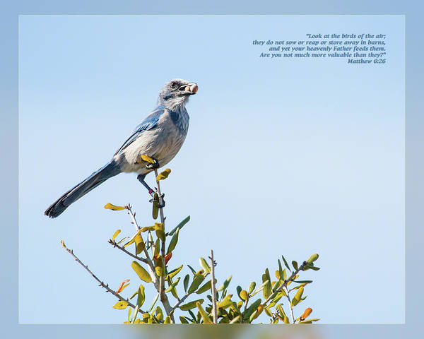 Photograph - Matthew 6 26 by Dawn Currie