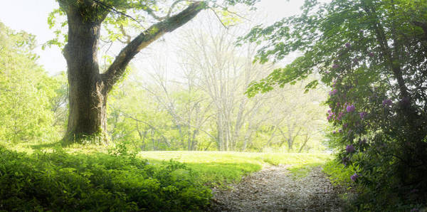Photograph - Maudslay State Park 2 by Rick Mosher