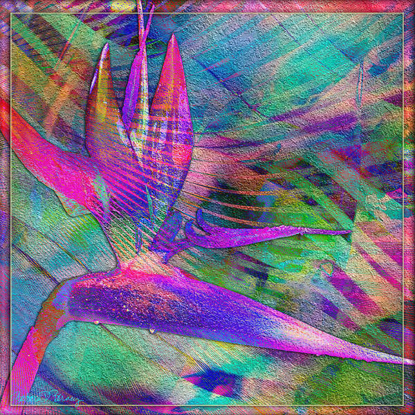 Digital Art - Maui Bird Of Paradise by Barbara Berney