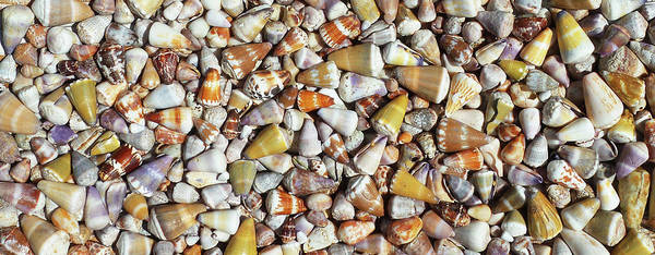 Wall Art - Photograph - Maui Cone Sea Shells by Stacy Vosberg