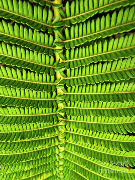 Photograph - Maui Fern Garden by Tom Jelen