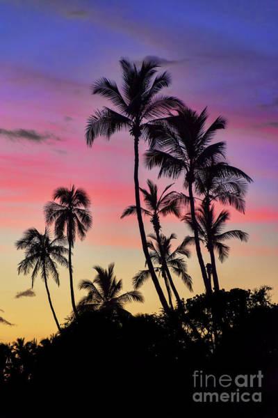Photograph - Maui Palm Tree Silhouettes by Eddie Yerkish