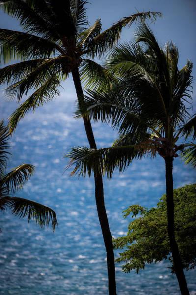 Photograph - Maui Palms by Jeff Phillippi