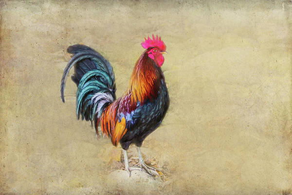 Photograph - Wild Rooster by Marilyn Wilson