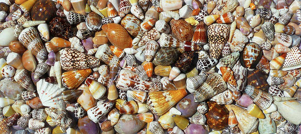 Wall Art - Photograph - Maui Sea Shells by Stacy Vosberg