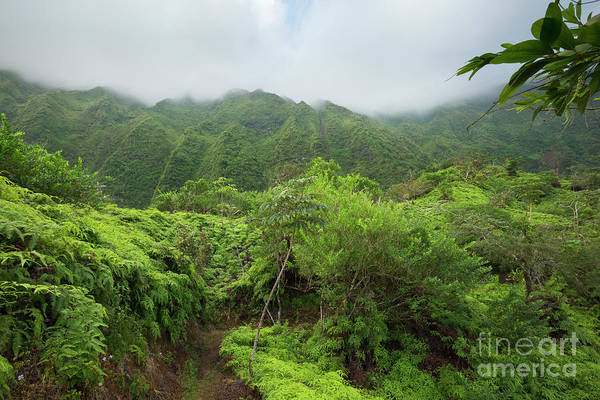 Photograph - Maunawili Demonstration Trail by Charmian Vistaunet