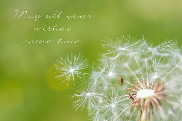 Photograph - May All Your Wishes Come True Dandelion by Terry DeLuco