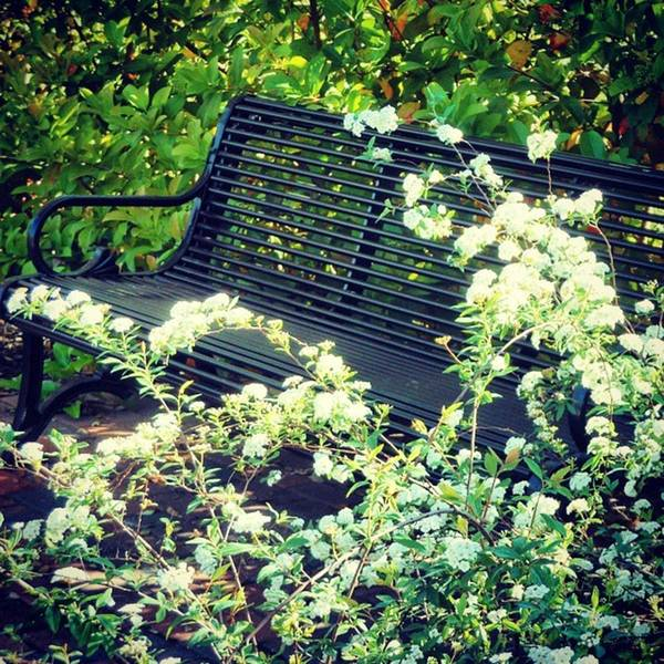 Photograph - May I Have This Seat? by Cheray Dillon