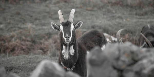 Goat Rocks Photograph - May I Help You by Betsy Knapp