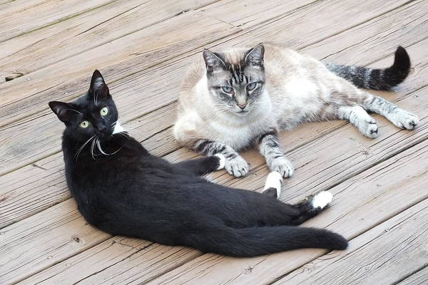 Photograph - Maya And Zing On The Deck by Duane McCullough