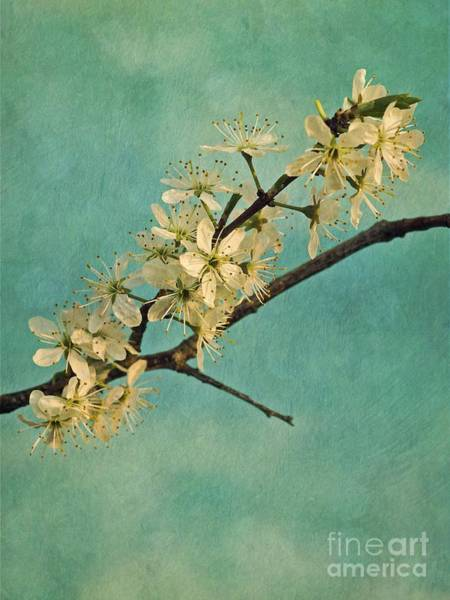 Wall Art - Photograph - Mayblossom by Priska Wettstein