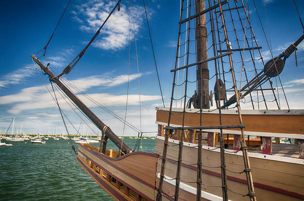 Photograph - Mayflower by Mick Burkey
