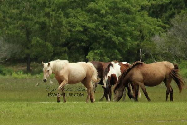 Photograph - Mayli 3770 by Captain Debbie Ritter