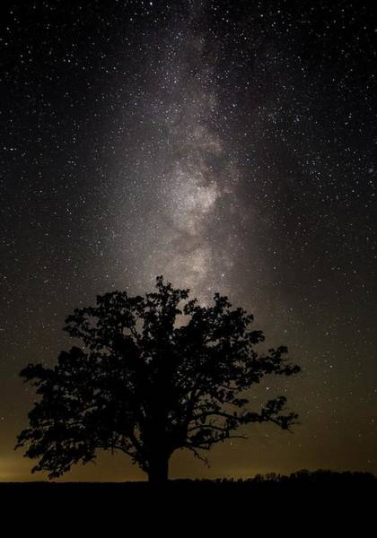 Photograph - Mcbaine Bur Oak With Milky Way by Harold Rau