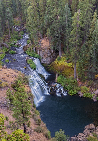 Photograph - Mccloud River And Middle Falls by Loree Johnson