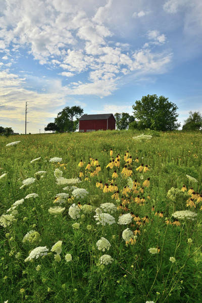 Photograph - Mchenry County Prairie Scene by Ray Mathis