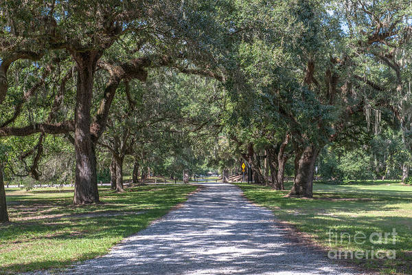 Photograph - Mcleod Allee by Dale Powell