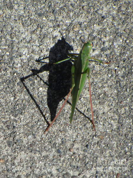 Photograph - Me And My Shadow by Marie Neder