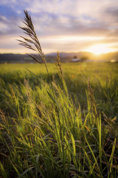 Green Grass Photograph - Meadow Light by Chad Dutson