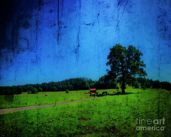 Photograph - Meadow Light by Edmund Nagele