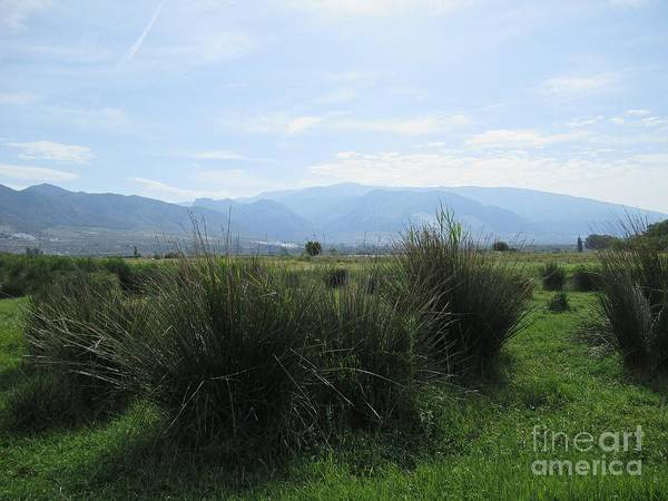 Photograph - Meadow Near Padul by Chani Demuijlder