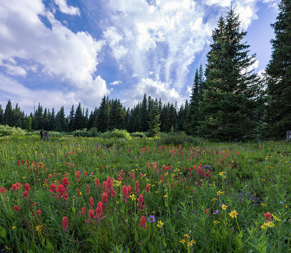 Alpine Meadows Photograph - Meadow Of Indian Paintbrush, Alpine Aster And Alpine Daisy In Th by Bridget Calip