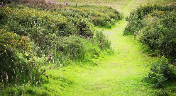 Wall Art - Photograph - Meadow Path by Svetlana Sewell