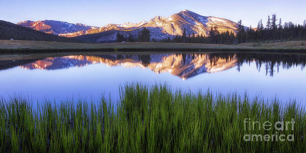 Photograph - Meadow Sunrise by Anthony Michael Bonafede