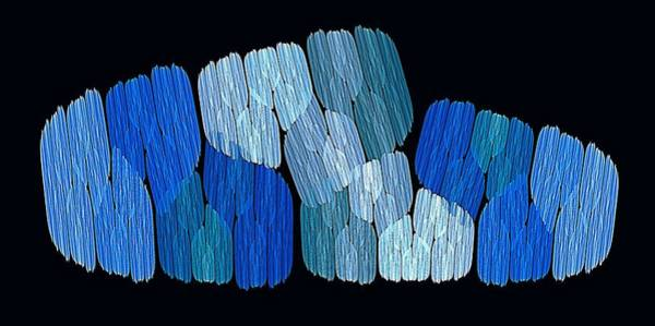 Digital Art - Meadow Winter by Doug Morgan