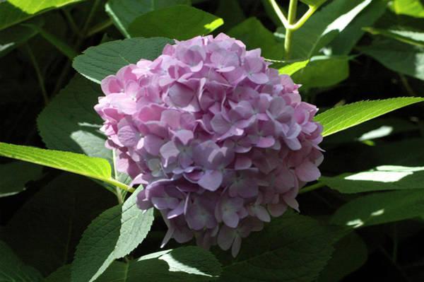 Meadowbrook Photograph - Meadowbrook Garden Flower by Lisa Wesley