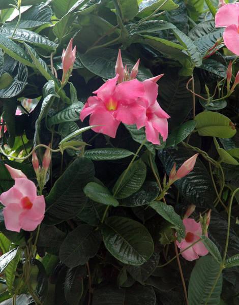 Meadowbrook Photograph - Meadowbrook Garden Flower Vi by Lisa Wesley