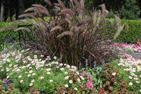 Meadowbrook Photograph - Meadowbrook Garden Of Flowers by Lisa Wesley