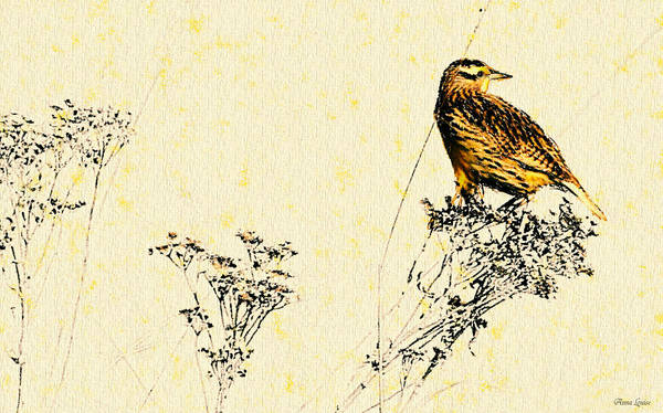Photograph - Meadowlark In Kansas Prairie 2 by Anna Louise