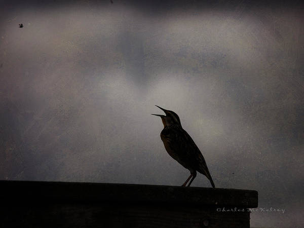Photograph - Meadowlark Song by Charles McKelroy