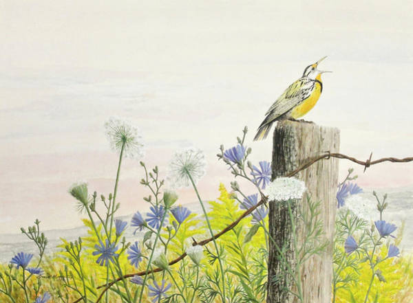 Meadowlark Painting - Meadowlark by Steve Mountz