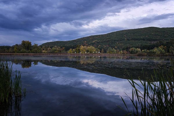 Photograph - Meadows Dusk by Tom Singleton